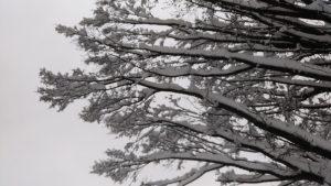 La nature sous la neige
