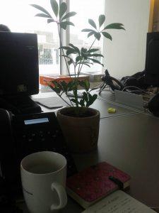 La plante sur mon bureau