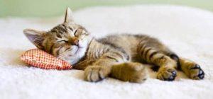 La sieste, le bonheur