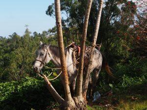 Un cheval perché sur la montagne