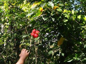 Végétation Cuba El Nicho