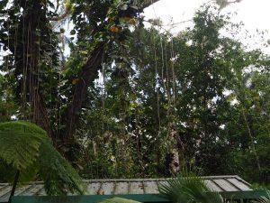 Cuba, El Nicho, végétation