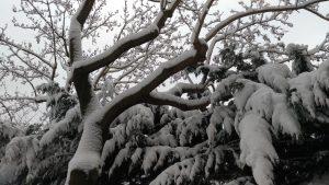 La neige à Paris