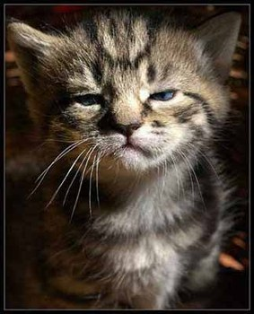 chaton-mouille.jpg